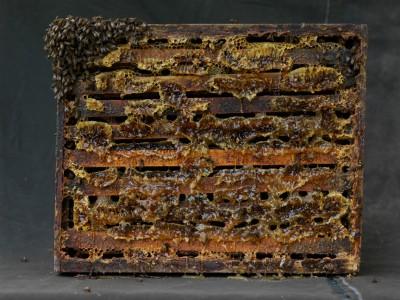 Bees Frame, 2010