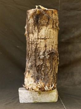 Wood - Still Life, 2009
