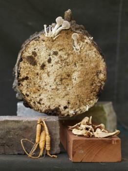 Mushroom and Ginseng - Still Life, 2010
