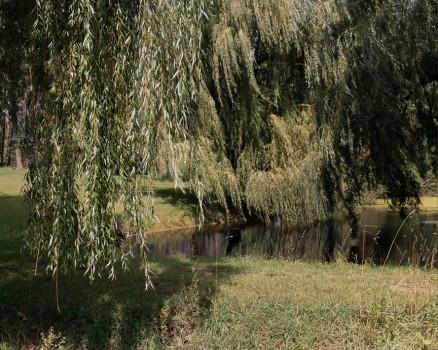 Old Field Farm Lake, 2010