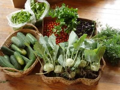 Garden Vegetables - Still Life, 2010